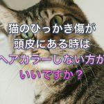 猫のひっかき傷が頭皮にある時はヘアカラーしない方がいいですか?