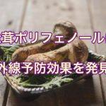 松茸ポリフェノールに紫外線予防効果を発見!