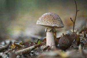 mushroom_in_the_forest_by_svitakovaeva-d5h2i9z