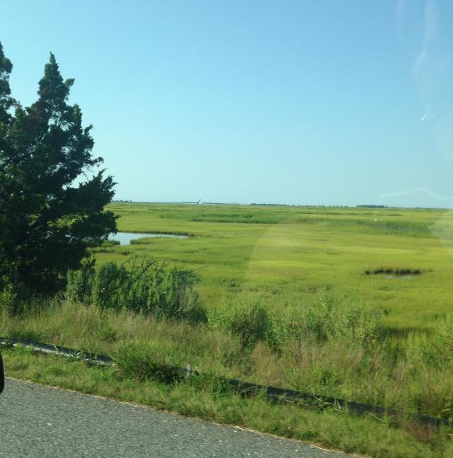 undisturbed wetlands 2