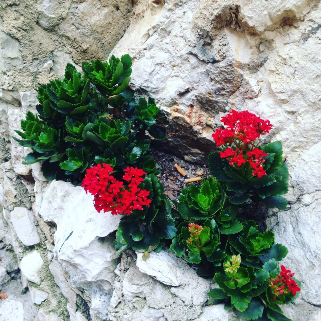 Eze flowers in the rocks GOLD