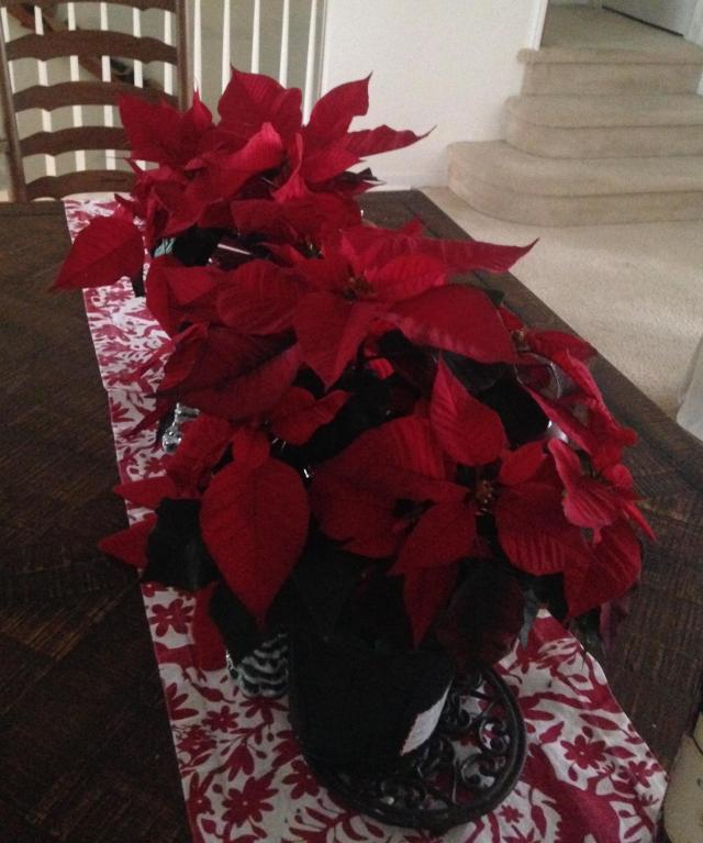 the-poinsettias-3