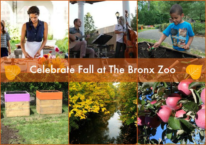 Fall Activities at the Bronx Zoo