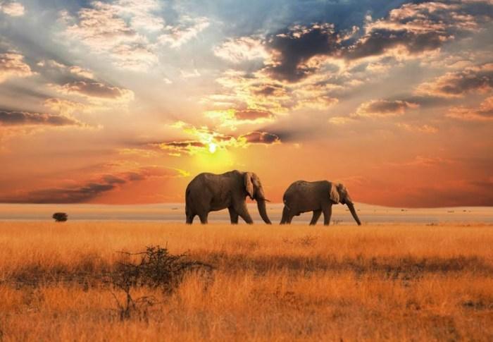 1, 2, 3, nous allons… en Afrique!