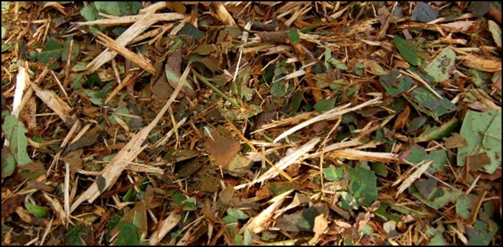 Enrichir la terre avec du BRF en permaculture par Christian Lanthelme du blog conseils coaching jardinage
