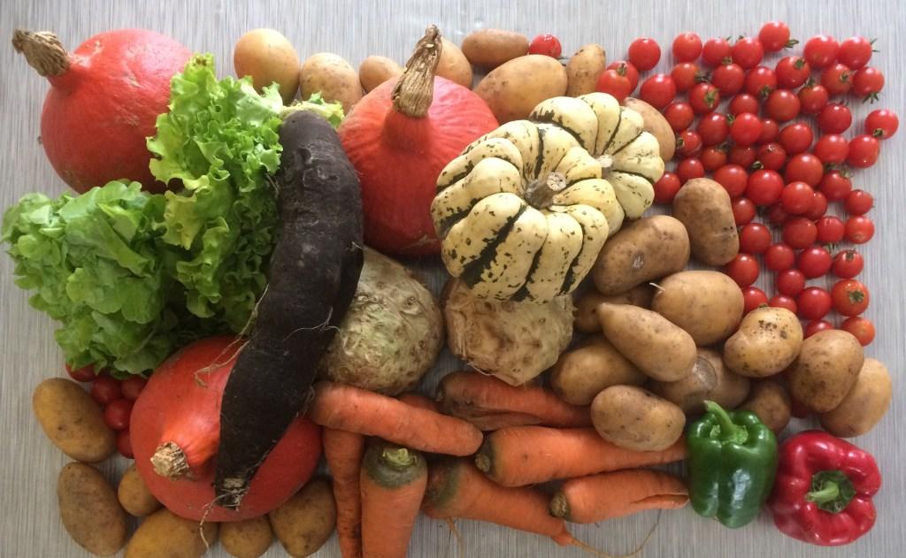 Cultiver des pommes de terre dans un potager en permaculture