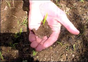 liste des semis et plantations en permaculture et au potager en janvier