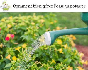 gestion de l'eau au potager