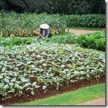 astuces de jardiniers par Loic Pinseel
