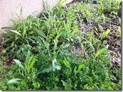 herbes dans gravier