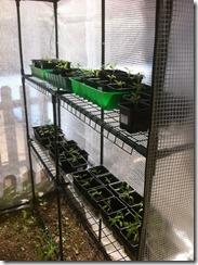 semis dans la serre