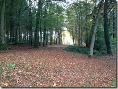 Sol de forêt