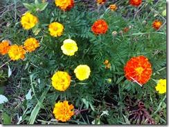 Fleurs au jardin et biodiversité