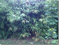 Se Debarrasser Facilement Des Bambous