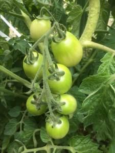 tomate et préparation naturel