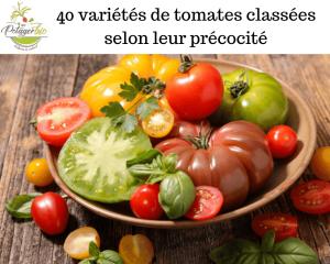 40 variétés de tomates classées selon leur précocité