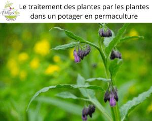 le traitement des plantes pour les soigner