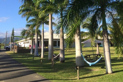 Allée palmiers