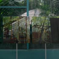 Michelle-Auboiron-expositions-Serres-d-Auteuil-Paris-2004--8 thumbnail