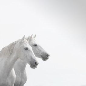 Deux Crin Blanc
