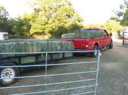 About Us — Orchard grass hay delivery!