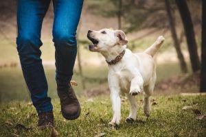 petpalooza, dog trot, game farm park, parks & rec, auburn wa, city of auburn, doggos, 3k fun run, 5k fun run