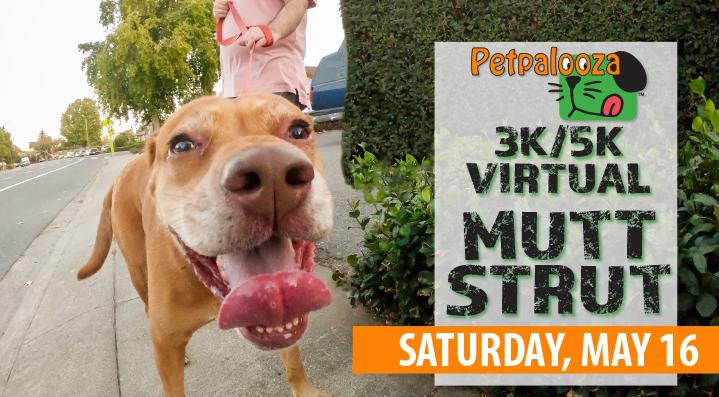petpalooza, mutt strut, virtual 5k, city of auburn, auburn wa, mutt strut 5k, virtual mutt strut, auburn mutt strut