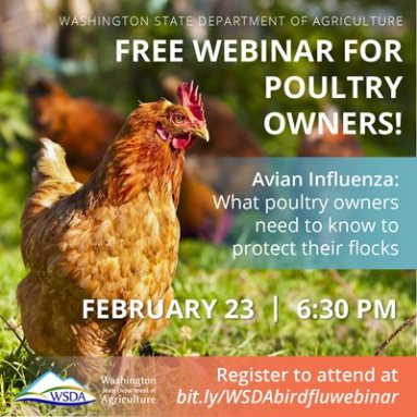WSDA Graphic with red chicken promoting free webinar for poultry owners