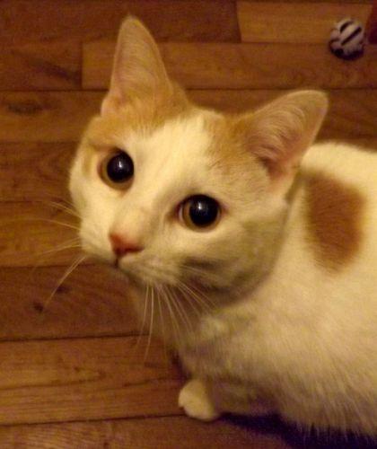 Alva, chatte à adopter