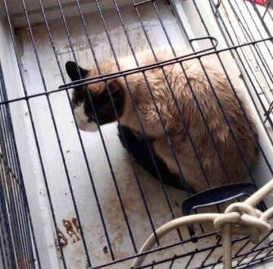 fripouille séquestré en cage