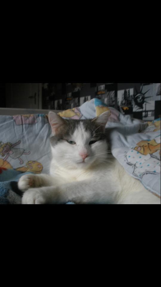 Chat perdu à Rouez Sarthe 72