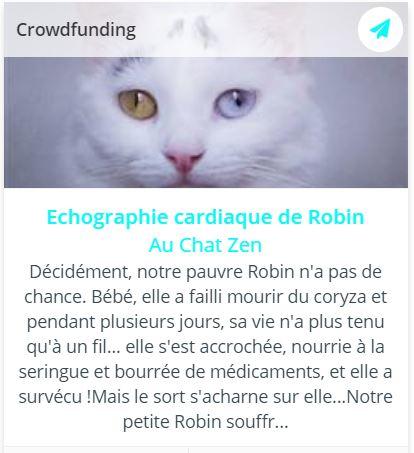 Collecte pour régler l'échographie cardiaque de Robin, chatte blanche aux yeux vairrons