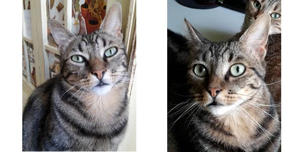 2 photos de Kyle, chat conduit aux urgences de nuit