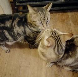 Kyle, le chat malade, et sa sœur se font plein de bisous à son retour dans sa FA.