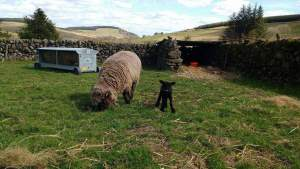 Ursi and Pinkie in paddock