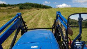 tedding the newly cut rows