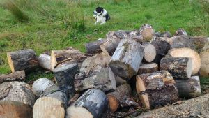 wood pile and George