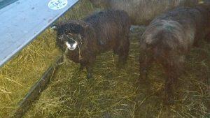 Ymogen Tuesday - at hay rack