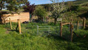 sheep handling area