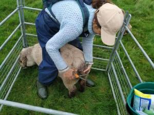 nicole doing sheep bottom