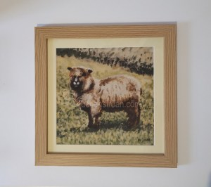 Pictures of sheep in the Scottish countryside - Yggy framed
