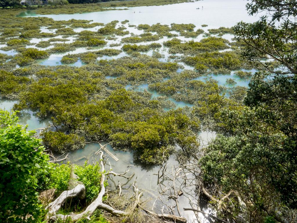 Hobson Bay Mangroves - Landscape Photography