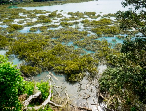 Hobson Bay Mangroves - Landscape Photography