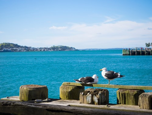 Viaduct Harbor Seagulls - Street Photography Auckland