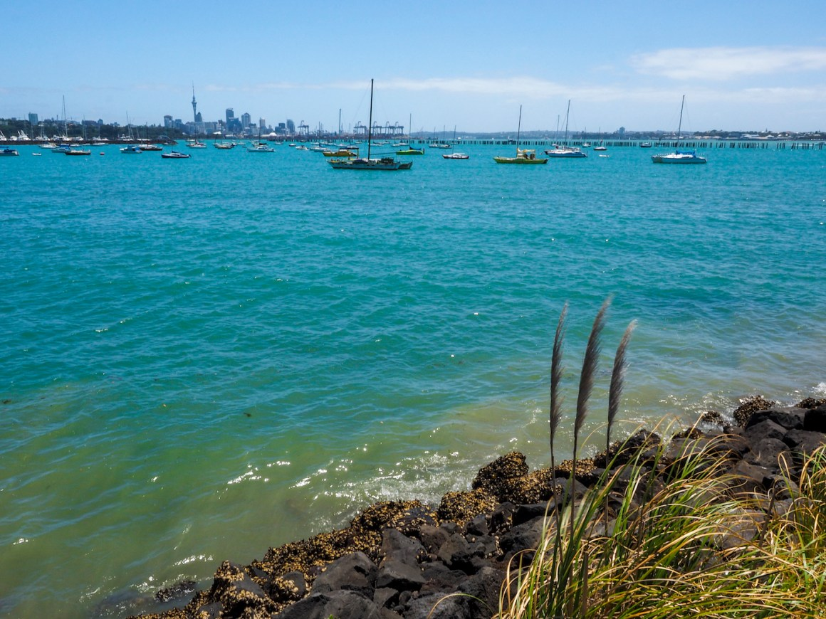 Yachts in the Okahu Bay in Auckland