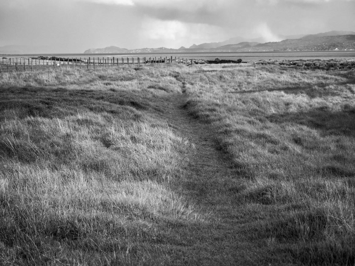 Grass Fields Ambury Park - Landscape Photography Auckland