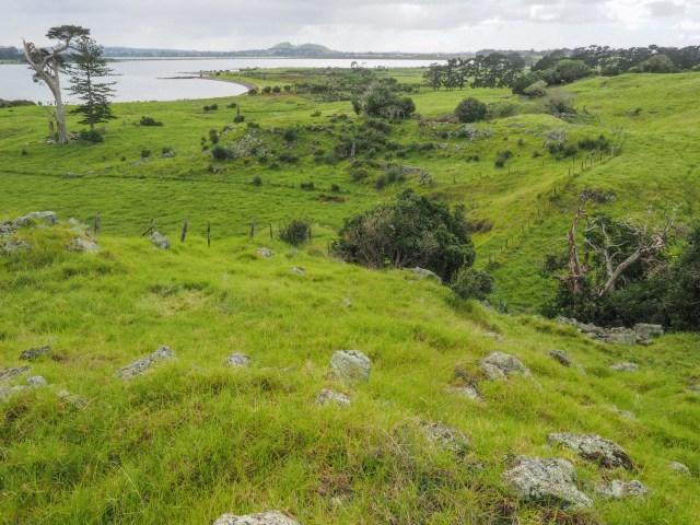 Auckland Avocado Orchard Surroundings - Otuataua Stonefields