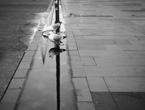 Seagulls and Water puddle at Viaduct Harbour - Street Photography Auckland