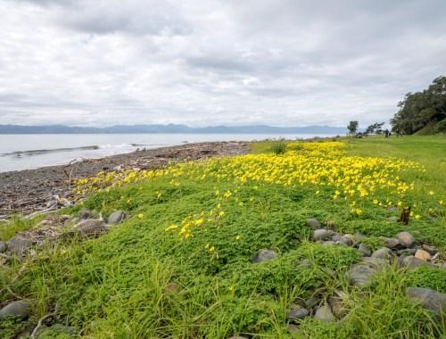 Tapapakanga Regional Park Flower Field