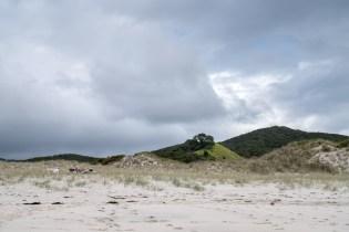 Dunes at Medlands Beach on Aotea Great Barrier Island